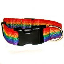 Rainbow-colored dog collar